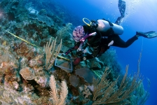 Expeditie Saba Bank 2018 – Er komt een koraaltje bij de dokter