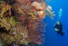 Snorkelen en duiken in Belize – wat wil je niet missen?