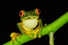 Belize: natuur, cultuur en avontuur