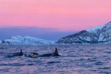 OFFT – Over orka's, sepia's en brak water
