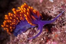 Leendert Smit – Macroleven in de Zee van Cortez