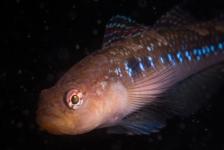 Leendert Smit – 2 duikjes bij de Zeelandbrug