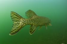 René Weterings – Voorjaarszonnetje onder water