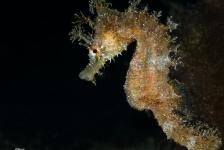 'Onderwaterfotografie voor beginners' bij DuikeninBeeld op Belgische Duiksportbeurs
