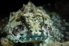 Thematafel: Onderwaterfotografie en compositie