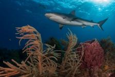 Leendert Smit – Naar de haaien (3)