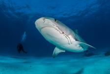 Leendert Smit – Naar de haaien (1)