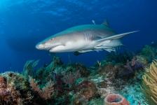 Leendert Smit – Naar de haaien (2)