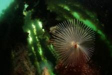 WK Onderwaterfotografie – de winnaars