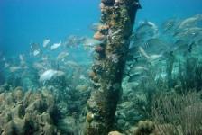 Bonaire, een eiland vol verrassingen