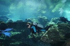Linda Struik – Cenotes