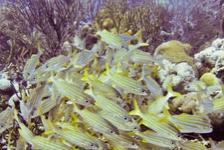 Bonaire: meer dan alleen een Divers`s Paradise!