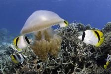 Film: Great Barrier Reef