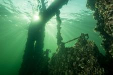 John Landa – Een schitterend einde van mijn duikseizoen