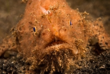 Passport to Paradise –  Muckdiving-hoofdstad Lembeh