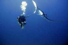 Malediven in 30 seconden met… Marc Kouwenberg