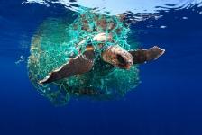 UPY2019 – de top tien Marine Conservation