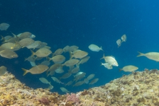 Ad Aleman – Nog een keer onder water bij de Azoren