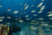 Aike Willemsen – Kaapverdië, vis, vis en nog meer vis!