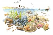 Duik mee op een schelpdierbank in de Noordzee