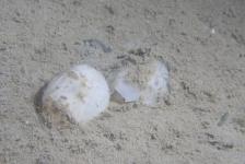 Anja Blonk – Schepjes op het zand