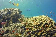 Antionette Derksen – Op avontuur in Egypte (2)