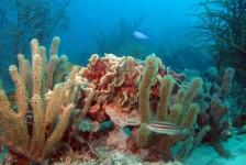 One Happy Island: de riffen van Aruba