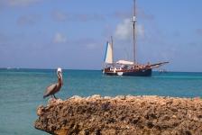 De vijf mooiste snorkelplaatsen van Aruba