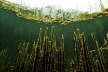 Berthold Raadsen – Van onder water naar boven water