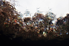 Berthold Raadsen – Caleidoscopisch effect onder water