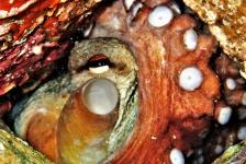 Berthold Raadsen – Middellandse Zee Rangatang krabbetje
