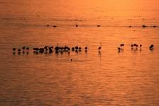 Berthold Raadsen – Drie duiken in Zeeland met flamingo's toe