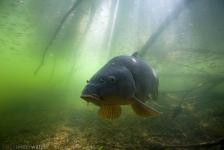 Aquashot geeft je op 1 april een blik onder water