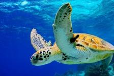 Bonaire Dive Week te volgen via live stream