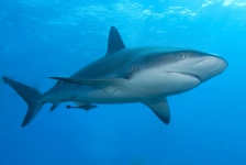 Selfie challenge – I love sharks!