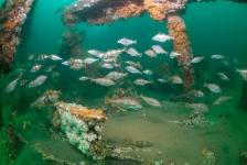 Nature Talks – De uitdagingen van fotografie in de Noordzee