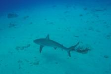 Een gezonken schip en een haaienhotel
