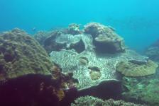 Tim de Haan – Crystal Bay bij Nusa Penida
