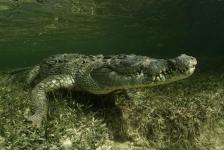 Daan van Schaik – In het water met krokodillen
