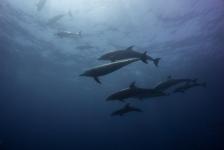 Daniël Versteeg – Diving heaven on earth………by far!!!!!!!!!!!
