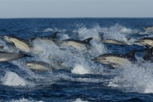 WNF: Biodiversiteit gehalveerd