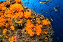 La Herradura – Tapas, zon en duiken