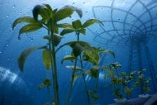 Maak kennis met NEMO's Garden op Duikvaker