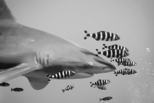 Lilian Dohmen – Naar de haaien