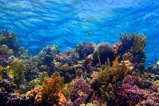Heb ik een aanvullende duikverzekering nodig als ik op duikvakantie ga?