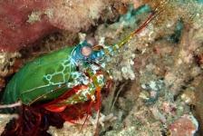 Wouter Hoogerwerf – Van Makassar tot Mantis shrimp (4)