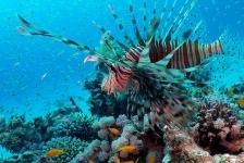 Dirk Van den Bergh – De meest spectaculaire duiken van Dahab