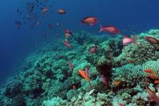 Dirk Van den Bergh – De spectaculairste duik in Dahab