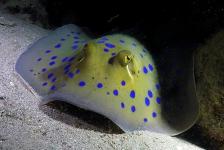 Dirk Van den Bergh – Lange naam, klein visje