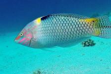 Dirk Van den Bergh – De spectaculairste duikstek van Dahab!